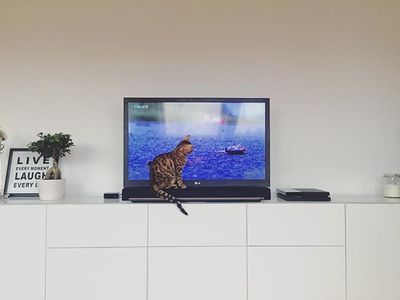 bildungsfernsehen . #bengal #cat #watching #tv #on #sonos #playbar #catlove #catsofinstagram #interior #life #love