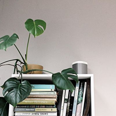 music, plants, and books :: what do you fill your work space with? | #cjm_la #landscapearchitects #interiordesign #visualthinker #sonos #sonosstudio