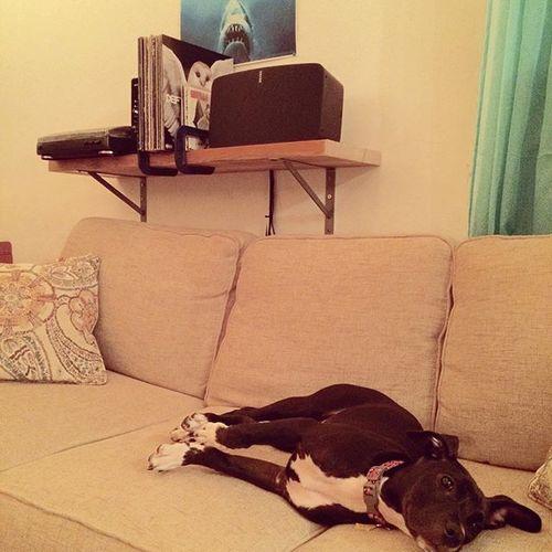 Some of my favorite things: #Pitbull, #vinyl, #sonos. @sonos #VinylOnSonos