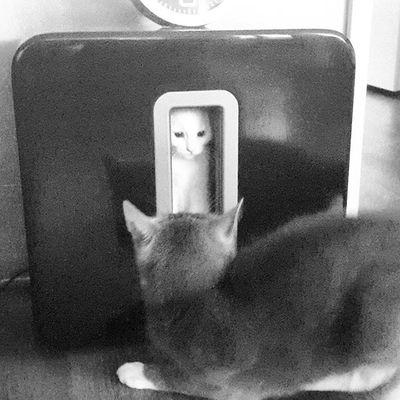 Hiding place in subwoofer when Zoë whas little#cat #cats #instacat #catstagram #mycat #mycats #lovecat #lovecats #catsofinstagram #miauw #mypet #mypets #catlife #milk #lovemycat #lovemycats #catsoftheworld #catofig #cutecat #cutecats #catlover #catlovers #happycats #jilzzvszoe #catselfie #cats_of_instagram #sonos #subwoofer