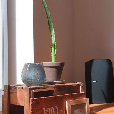 Mein kleiner grüner Kaktus  #sukkulenten #flowersofinstagram #plants #sunshine #kleinergrünerkaktus #interior #sonos  #play5 #homesweethome #kiste #cola