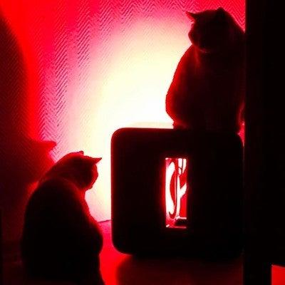 #sonos #sonossub #cats #sonoscats