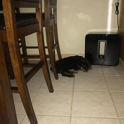 I found a very cool spot but can someone please lower the base?  I'm trying to take a nap!  #sonos #nala  #rottweiler #rott #rott #rottiepup #rotties #dogs #dogstagram #dogscorner