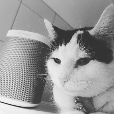 #ourcat #sonos #play1 #sonosplay1 #love # #life # #peace #tranqulity #life #low #highonlife #snow #black&white