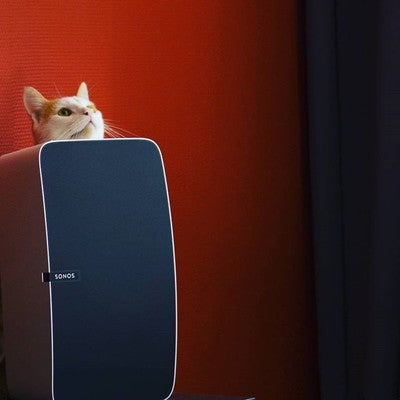 Paco loves the #Sonos #play5 special #catedition #sonosplay5 #cat #funnycats #catsofinstagram #catsofig #music #cats #wirelessspeaker #multiroomspeaker #catsandtechnology #perfectcat #musicalcats #speakercat