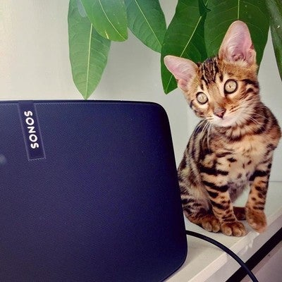 I love to turn the volume up and down with my paws to annoy mom and day Thanks #sonos for your cat-friendly design #bengal #cat #bengaal #dutchcats #kittenofig #catofig #catsofinstagram #kittenlife #play5