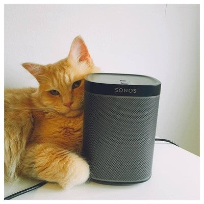 He loves the sound  Sonos Play 1 #petsagram #animal #kitten #kitty #gadget #animals #animales #catstagram #petstagram #animallovers #beauty #kittens #sonos #electronicolife #play1 #calico #unicentrocali