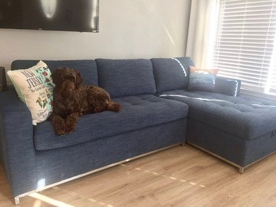 Image By Shannbutt15 Containing Furniture, Couch, Dog, Floor, Loveseat