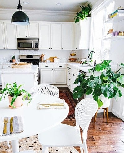 Indoor Potted Plants Delivered to Your Door – The Sill on indoor bonsai plants, container flower garden design, indoor plants for bathrooms, plant rooms design, indoor plants and landscaping,
